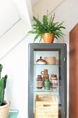 Fern on top of display cabinet with collection of old vases from the 50s