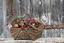 Autumn arrangement of rose hips, moss and apples in wicker basket in front of board wall