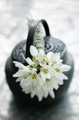 Posy of snowdrops on top of black Oriental teapot