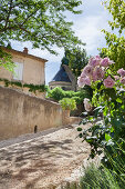 Mediterranean summer idyll: roses lining the path to an old house