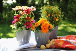 Colourful flower arrangement of tagetes and zinnias