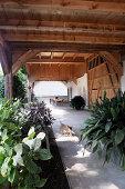 Überdachte Terrasse eines Bauernhofes mit Sommerpflanzen