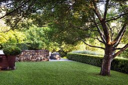 Magnificent tree on lawn, delimited by box hedge and natural stone wall