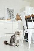 Katze sitzt neben weißem Metallstuhl in heller Küche mit weißem Boden