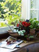 Gardening tools on cabinet below open window