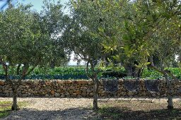 Chairs in garden with traditional Mediterranean stone wall and olive trees