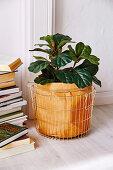 Zimmerpflanze mit brauner Papiertüte im Metallkorb