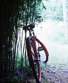 Old red bicycle leaning against bamboo in garden