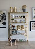 Small dog in front of various ornaments and vessels on elegant open shelving