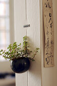 Houseplant in pot hung on interior wall