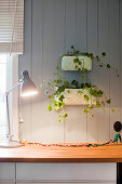 Houseplants on wooden wall above table lamp on kitchen worksurface