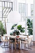 Monsterapflanze auf dem Esstisch mit verschiedenen Stühlen im Loft