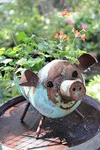 Red-flowering geranium in rusty metal pig-shaped planter