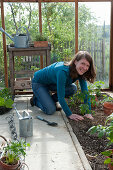 Plant tomatoes in the greenhouse