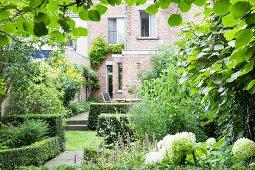 View through kiwi vine into lush green back garden