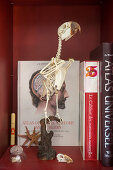 Mounted bird skeleton and books in display case