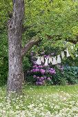Wäscheleine mit Puppenkleidern an einem Baum in der Blumenwiese