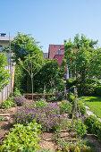 Gemüsebeet im natürlichen Sommergarten bei blauem Himmel