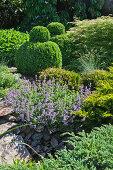 Verschiedene Stauden und Buchsbaumkugeln im Steingarten