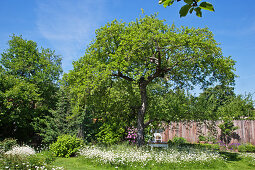 Old trees and meadow flowers in cottage garden
