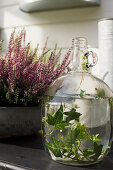 Ivy tendrils in demijohn of water in front of heather