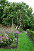Herbaceous border edging lawn path
