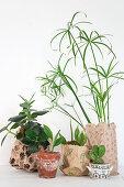 Group of various plants in printed paper bags