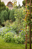 Herbaceous border and roses on metal trellising in ornamental garden