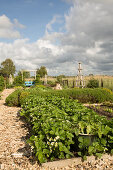 Vegetable patch and ornamental garden with mulched paths (Schleswig-Holstein, northern Germany)