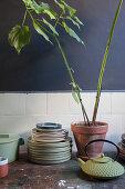 Geschirr und Zimmerpflanze auf altem Holztisch in Küche mit dunkler Wand