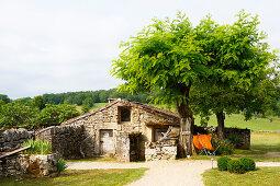Altes Natursteinhaus, davor Akazienbaum