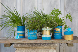 Kitchen herbs in tin cans decorated in blue and gold