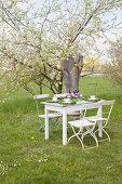 Festlich gedeckter Kaffeetisch unter dem blühenden Apfelbaum im Garten