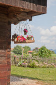 Colourful flowers in baskets in wooden crate hung from wooden gable of farmhouse
