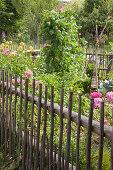Eingezäunter Garten mit Blumen und Gemüse
