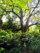 Vogeltränke unter Baum in dicht bewachsenem Garten