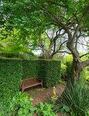 Holzbank unter Baum, umgeben von Buchsbaumhecke