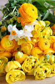 Luxuriant spring bouquet of ranunculus, tulips and cream narcissus