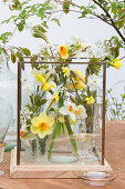 Posies of narcissus in glass containers