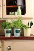 Three pots of herbs on old dresser