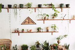 Wooden shelves with house plants on white wall