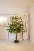 Christmas tree with naked trunk in white living room