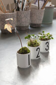 Plants (sycamore, wild strawberry and oxalis) planted in three numbered china mugs