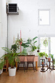 Various houseplants in high-ceilinged room with white brick wall
