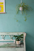 Wooden bench below plant in hanging basket on veranda with green wall