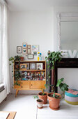 Eclectic collection of ornaments, mounted butterflies and houseplants on and around retro display cabinet next to disused fireplace