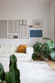 weiße Ledercouch und Zimmerpflanze, darüber alte Skizzen an der Wand