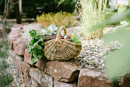 Basket of freshly picked vegetables next to garden pond