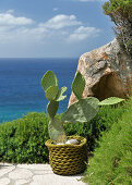 Cactus on viewing platform with sea view