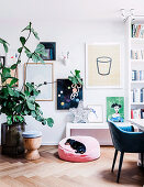 Large houseplant in front of wall with pictures, shelf with star decoration and dog on pillow in the living room